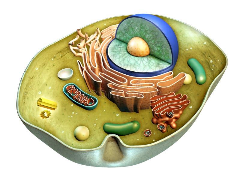 胞状结构 库存例证