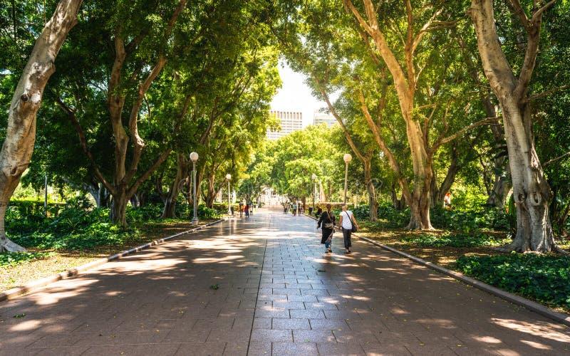 胡同和人们在巨大的树树荫下在海德公园的南部分在悉尼澳大利亚 库存照片