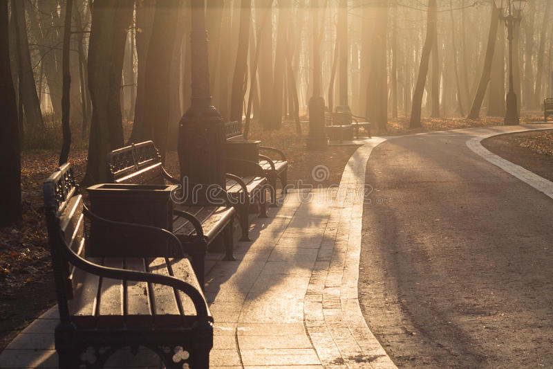 胡同在公园有薄雾的秋天早晨 免版税库存照片
