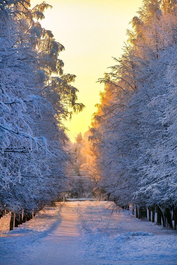 胡同在冬天公园在晚上 免版税库存图片