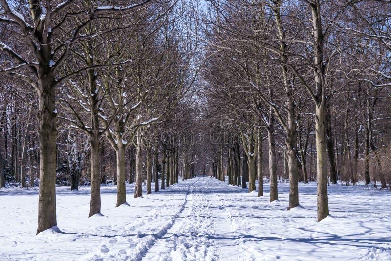 胡同在冬天 免版税库存照片