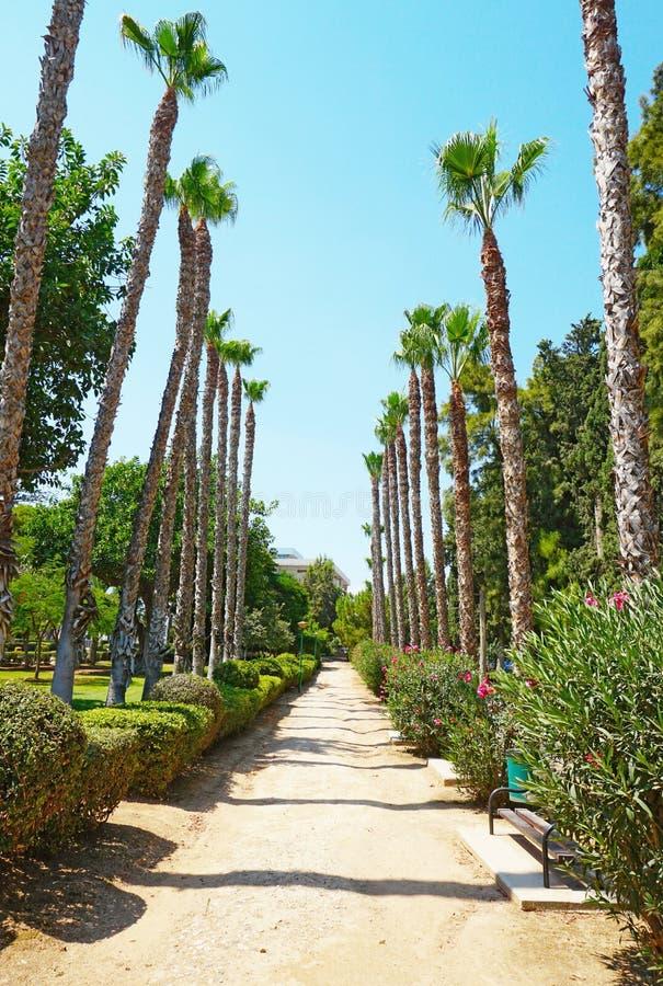 胡同在利马索尔自治市公园在塞浦路斯 免版税库存照片