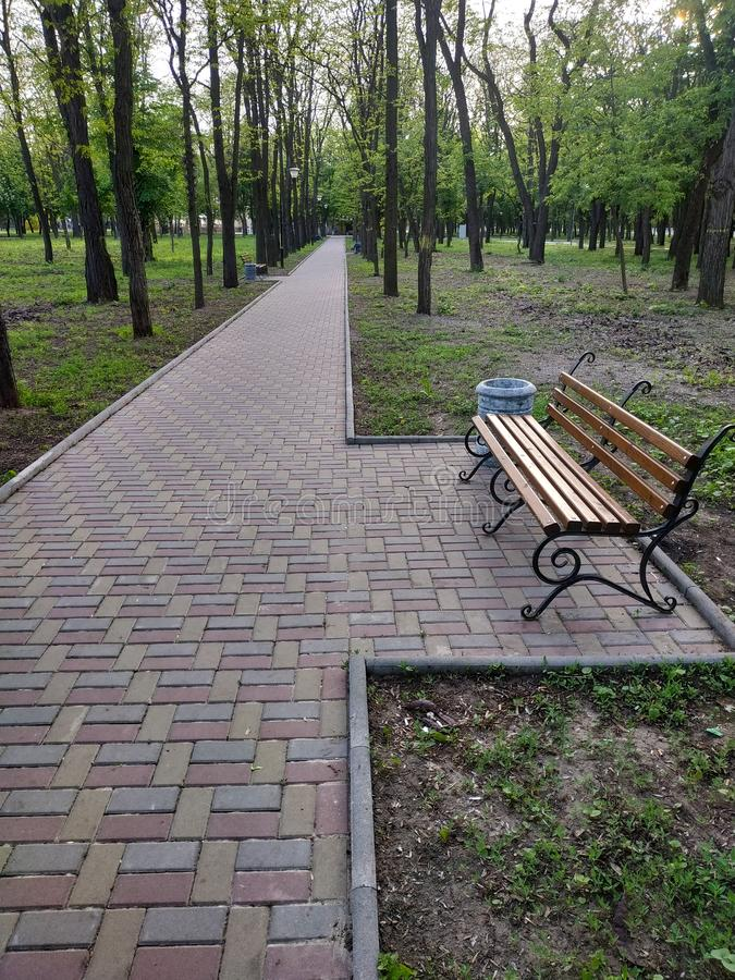 胡同在有落叶树的公园 库存照片