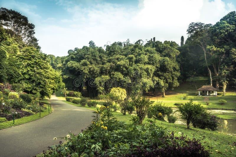 胡同在有风景设计的公园庭院里在皇家庭院佩拉德尼亚里在斯里兰卡附近的康提 免版税库存照片