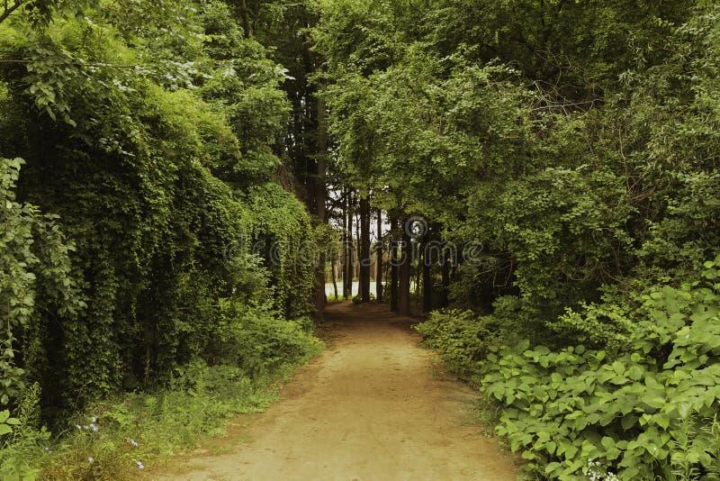 胡同在森林里 库存照片