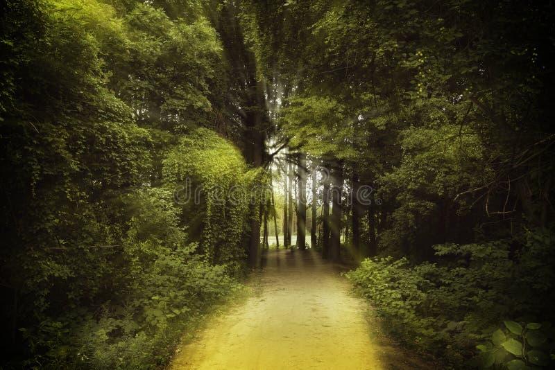 胡同在森林Mazovia里 免版税库存照片