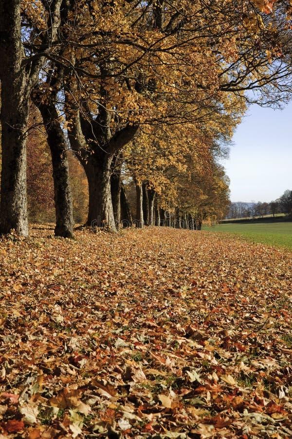 胡同在秋天 库存照片