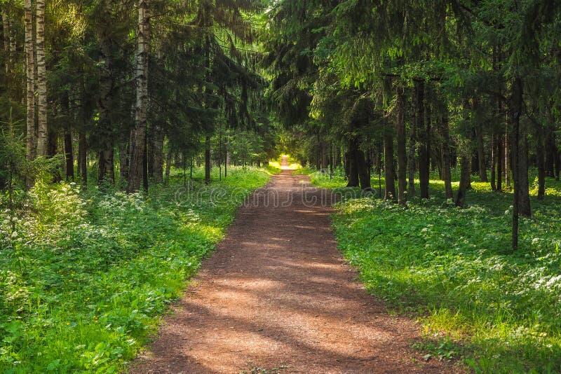 胡同在老公园Gatchina 俄国 库存照片