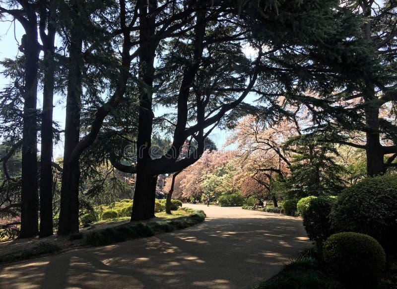 胡同在代代木公园在东京 免版税库存图片