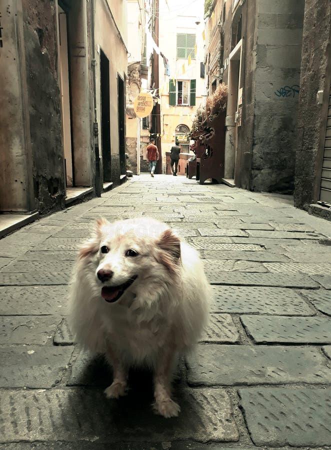 胡同的狗 免版税库存照片