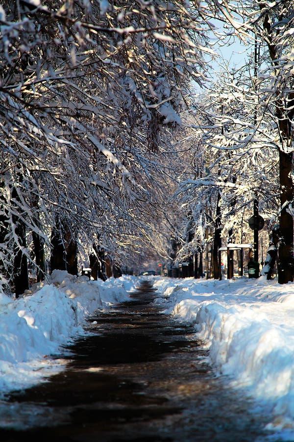从胡同的被取消的雪在大雪以后在公园 免版税库存照片
