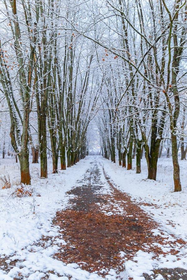 胡同 第一秋天雪和不整洁叶子在小径在一个被放弃的公园 库存图片