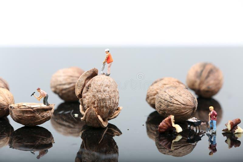 胡桃钳在繁忙的环境里 免版税库存照片