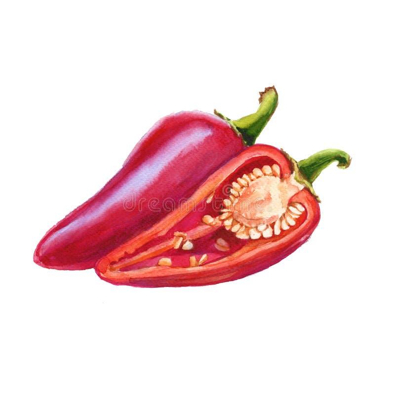 胡椒红色甜点 背景查出的白色 水彩illus 皇族释放例证