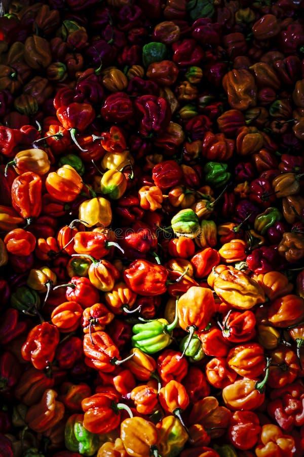 胡椒被暴露在城市市场 免版税图库摄影