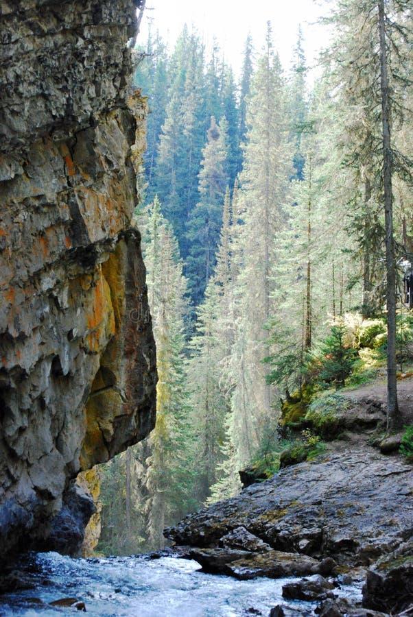 胡说的小瀑布水,岩石墙壁,树落矶山,加拿大 免版税库存照片