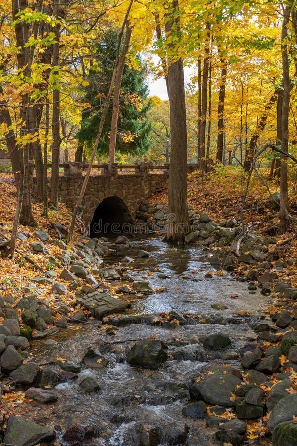 胡说的溪在金黄森林 库存照片