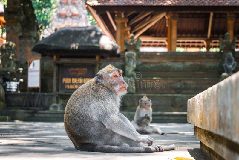 胡闹森林, Ubud,巴厘岛,印度尼西亚 库存图片