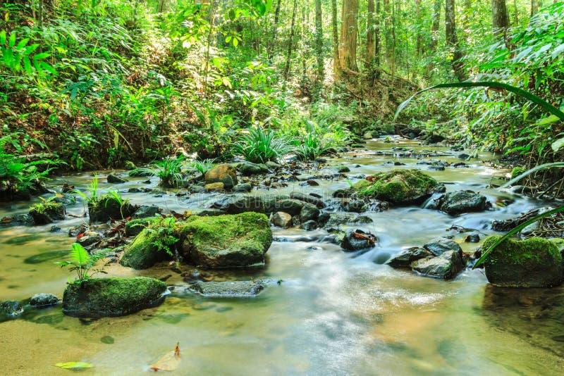 胡说的溪在绿色森林里 免版税库存照片