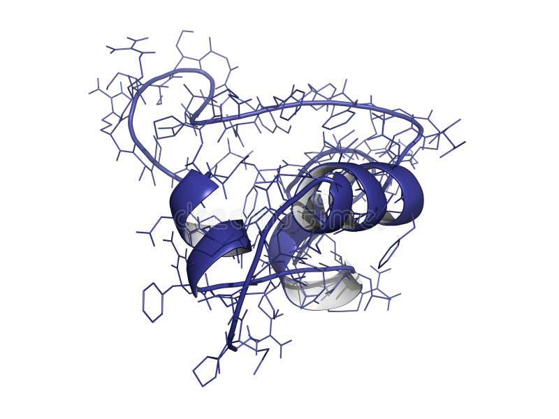 胰岛素象增长因子(IGF-1, somatomedin C) 库存例证