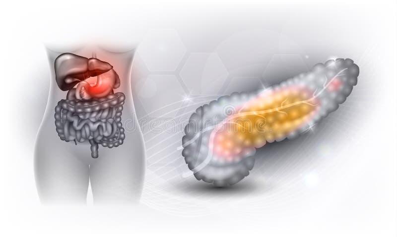 胰腺 皇族释放例证