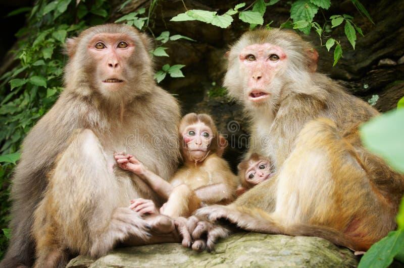 胳膊doesn系列有孩子母亲坐t的被留下的猴子 免版税库存照片
