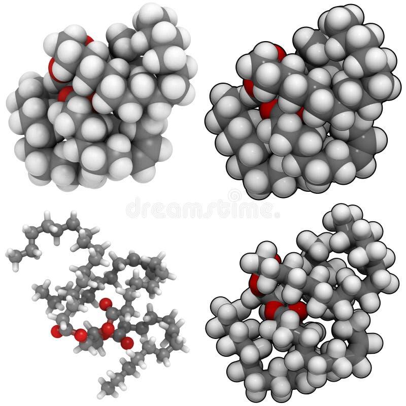 脂肪甘油三酸酯 向量例证