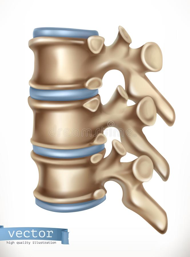 脊椎结构 人的骨骼,医学 3d向量 库存例证