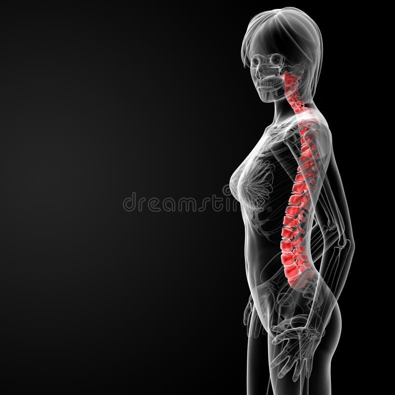 脊椎骨头 皇族释放例证