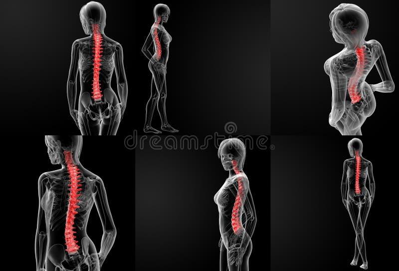脊椎骨头 库存例证