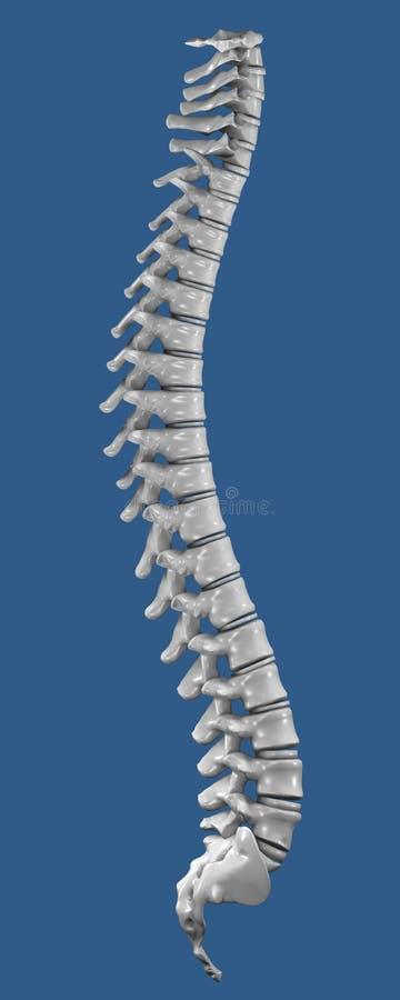 脊椎 库存例证