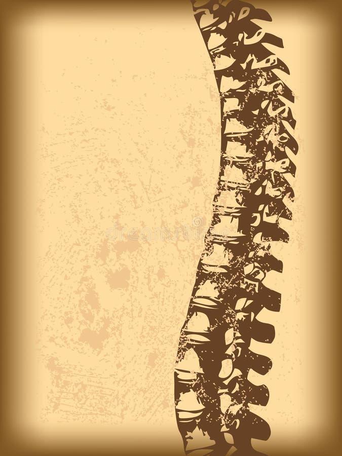 脊髓的绳子 皇族释放例证