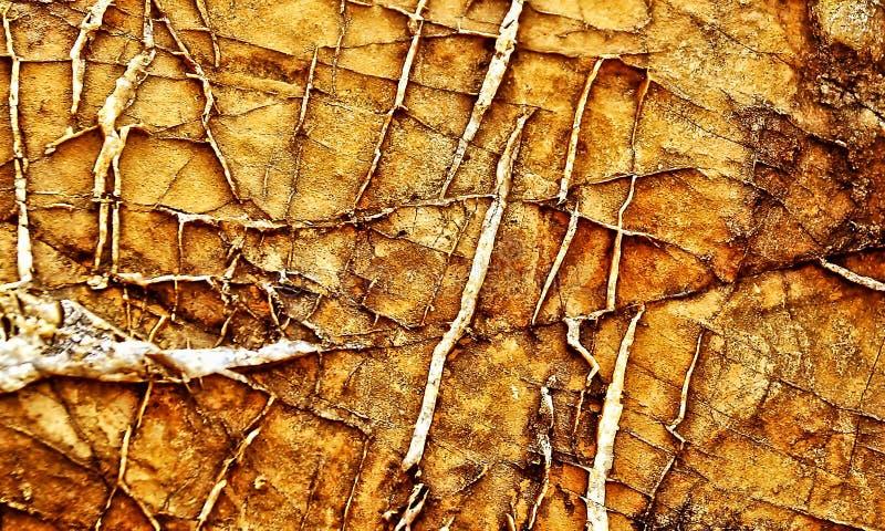 脏的岩石的凋枯的地形 免版税图库摄影