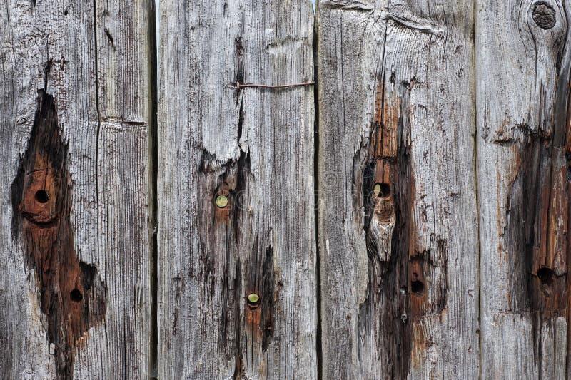 脏的木板条纹理 库存图片