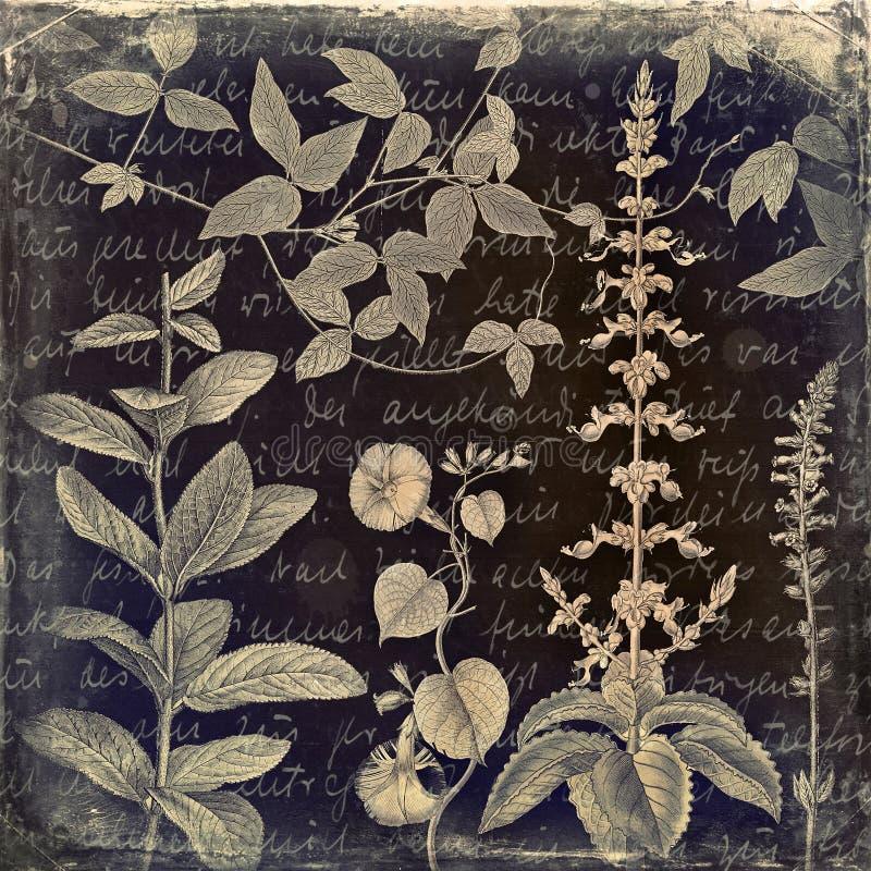 脏的植物的葡萄酒背景 免版税库存照片