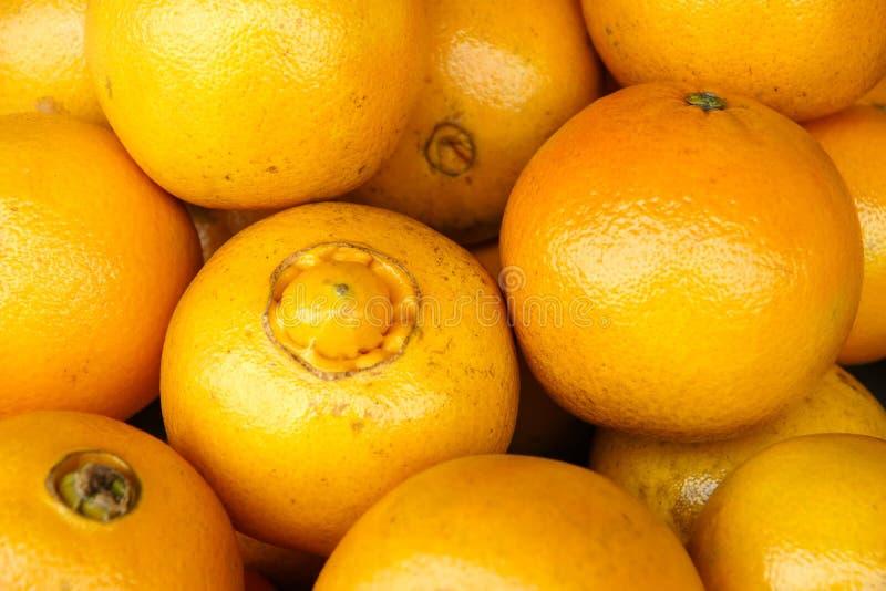 脐橙 图库摄影