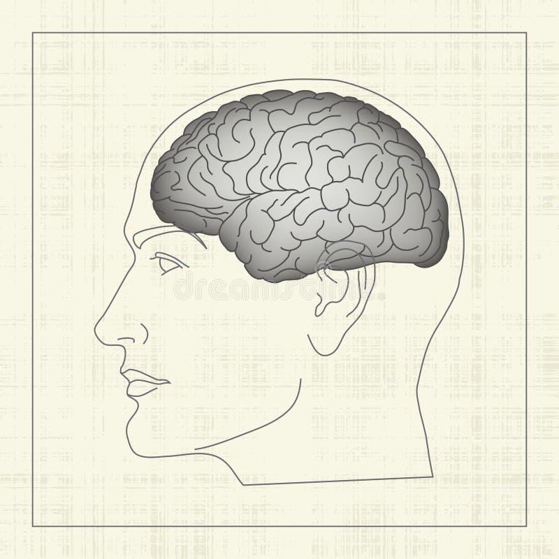脑子人 库存例证