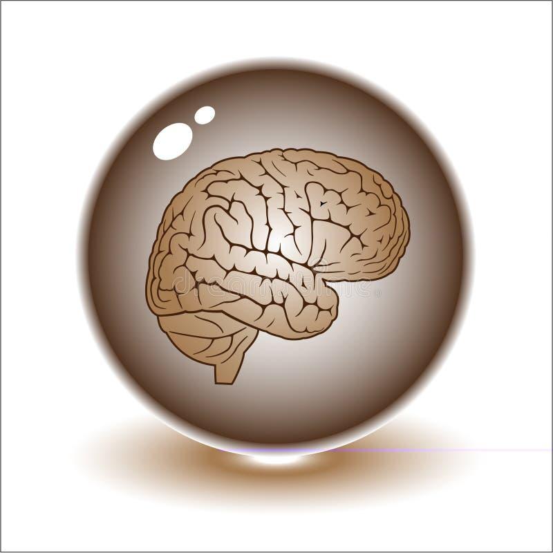 脑子例证向量 库存例证