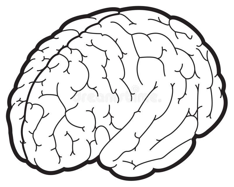 脑子例证 免版税库存照片