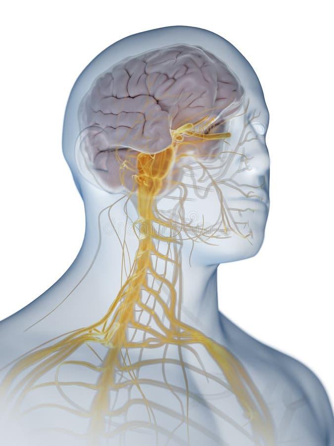 脑子和神经系统 库存例证