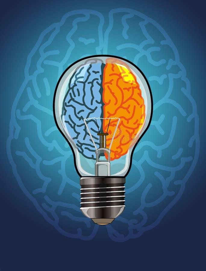 脑子左右 向量例证