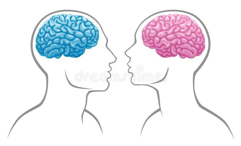 脑子性别 皇族释放例证
