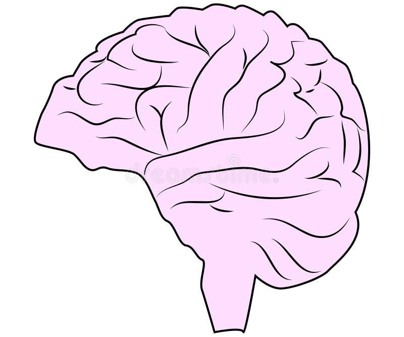 脑子或头脑侧视图线艺术颜色 库存例证
