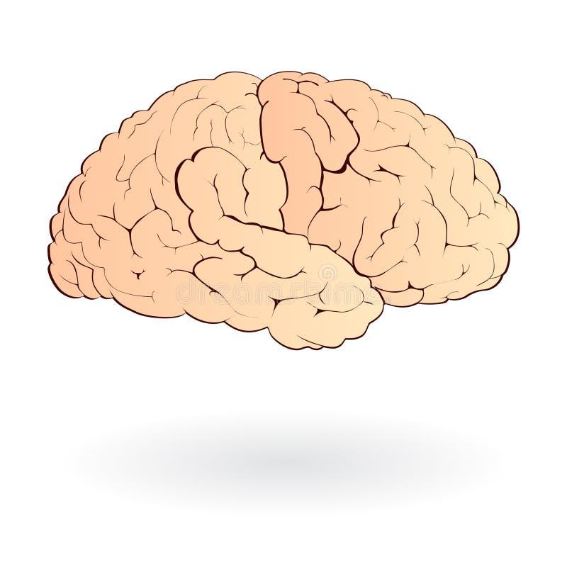 脑子查出 向量例证