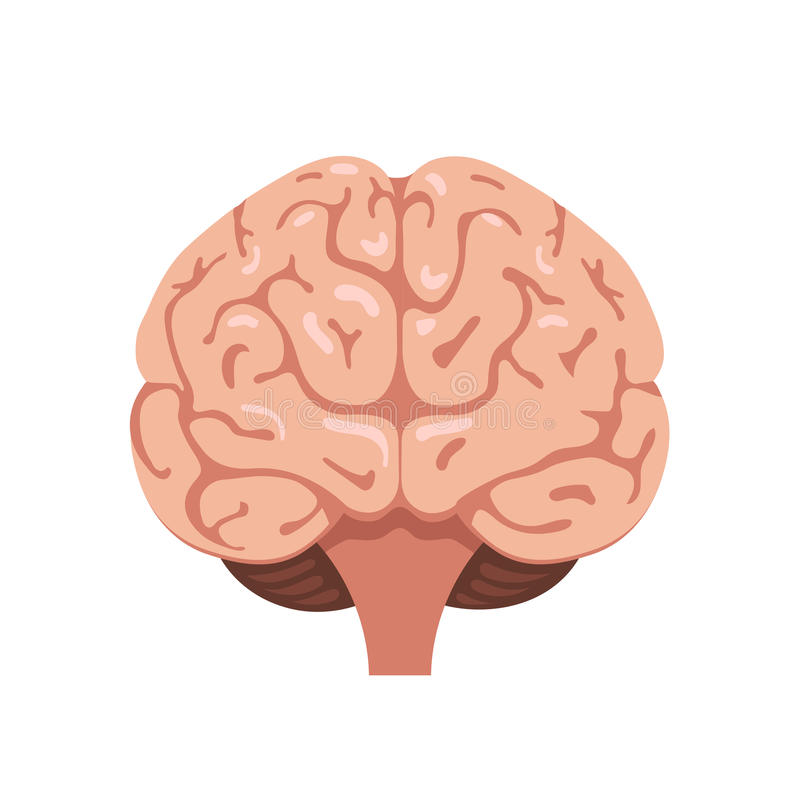 脑子正面图象