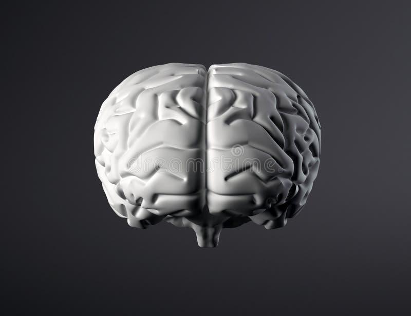 脑子正面图 向量例证