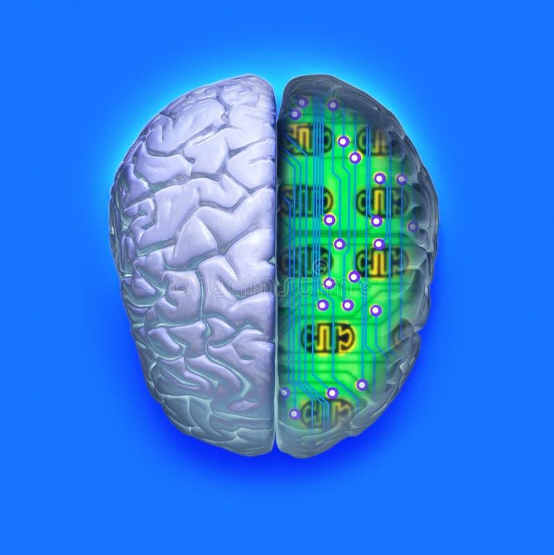 脑子电路计算机科技 皇族释放例证