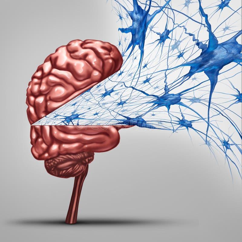 脑子神经元概念 库存例证