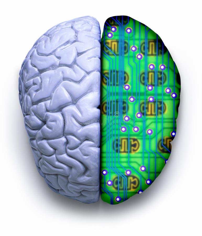 脑子计算机科技 库存例证