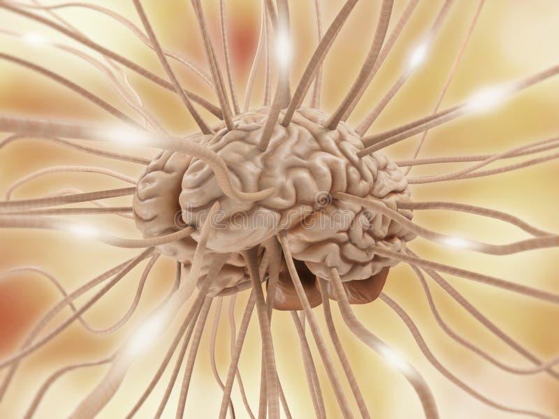 脑子连接数 库存例证